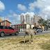Animal na pista na BR-101 em Neópolis