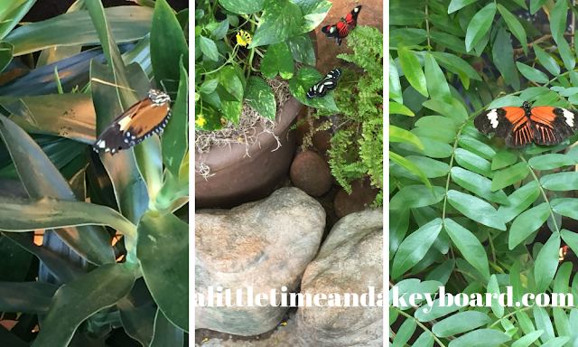 A collection of exotic and native butterflies will flutter by in the Puelicher Butterfly Wing of the Milwaukee Public Museum.