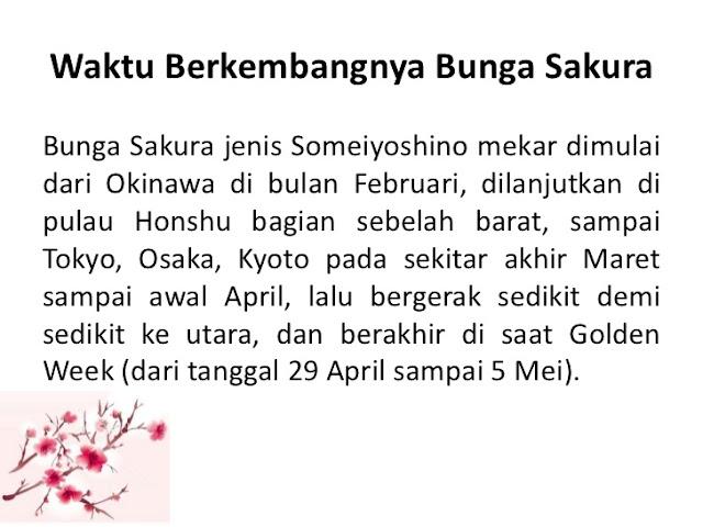 waktu berkembang bunga sakura