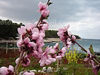 Miris proljeća, V. Lučica-Supetar otok Brač slike