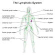 Lymphatic Drainage Massage For Ear Infections and Upper Respiratory Problems
