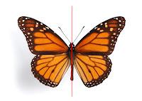 simetria bilaketarekin bat datozen irudiak