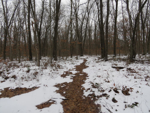 trail through snow