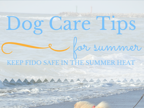 Pet Tip of the Month: Hot Asphalt Awareness and Summer Safety