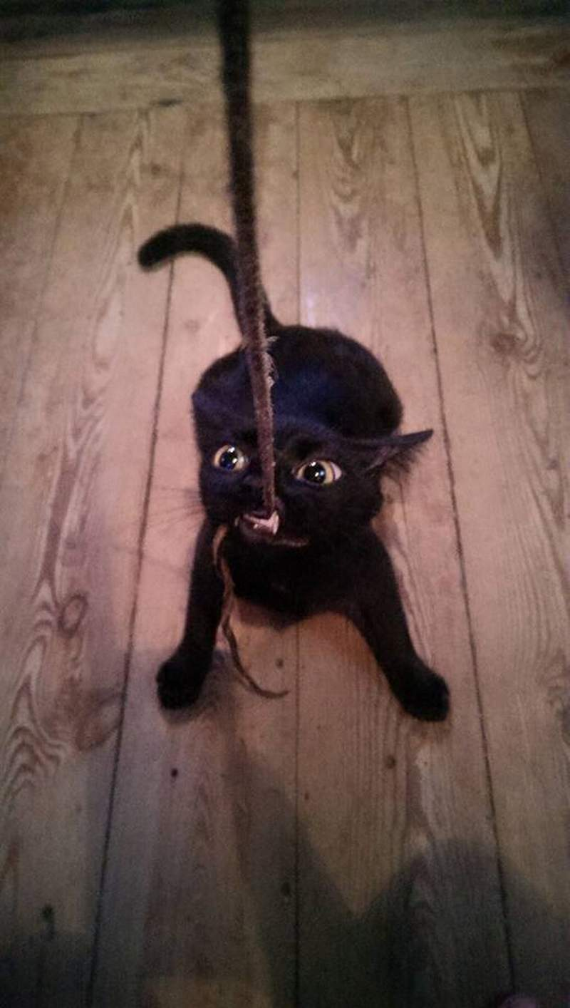 Funny cats - part 230, cutest cat photos, best cat pictures, funny cat photo