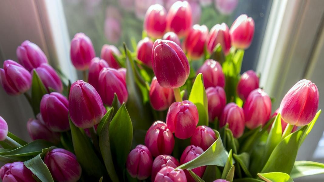 Przywołuję wiosnę, wredne koty i karkołomne tytuły. 12-18 marca