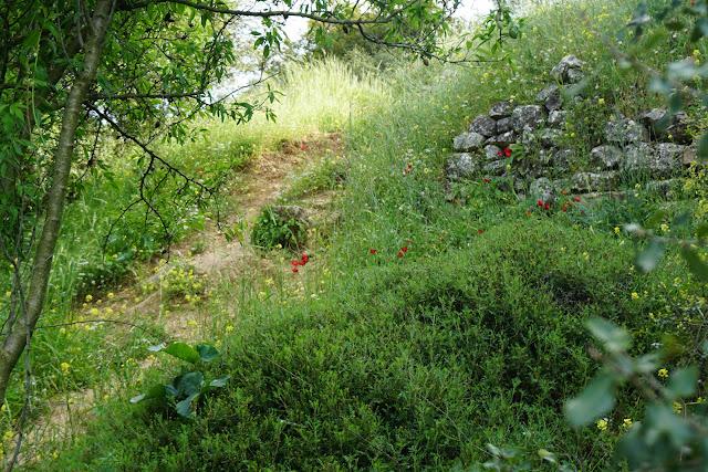 מסלול טיול ביער עציון