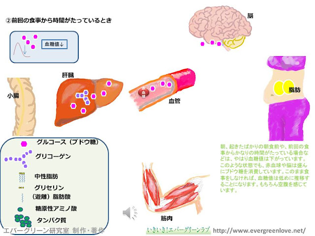 ブドウ糖(グルコース), グリコーゲン, 糖新生, インスリン, グルカゴン, 脂肪酸, 遊離脂肪酸, 中性脂肪(トリグリセリド), 脂肪燃焼,