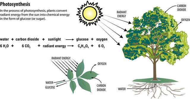 process of photosynthesis in plants with chemcial forumla