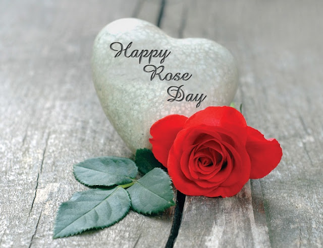 valentines rose day, happy valentines day rose