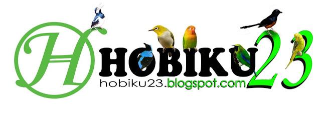 Tips Mengobati dan Merawat Burung yang Sakit Tips Mengobati dan Merawat Burung yang Sakit