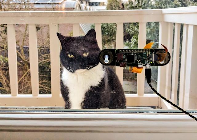 مهندس هواندي يصمم أداة للتعرف على وجوه القطط