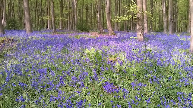 Tina's All sorts,  bluebells