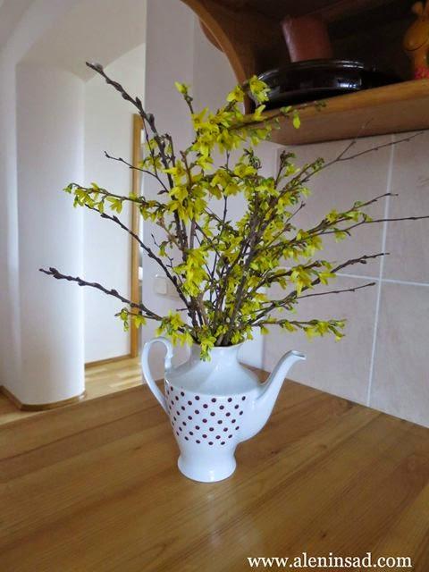 Forsythia, europaea, форзиция, форсайтия, букет, желтые цветы, цветотерапия, аленин сад, первые цветы, весенние
