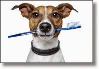 Picture of dog with toothbrush in mouth