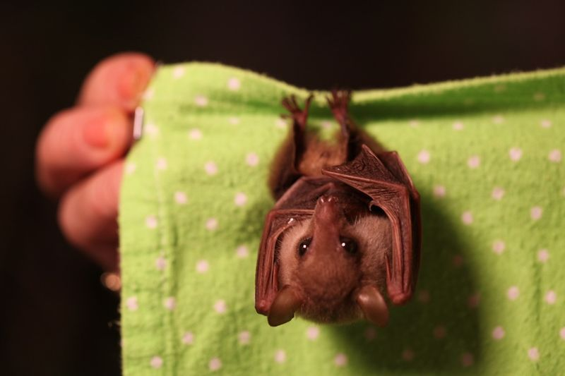 Baby Animals: Bat - Pup 22