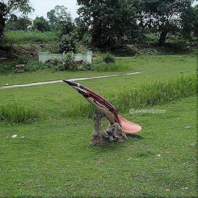 Ikan tilan Rohil