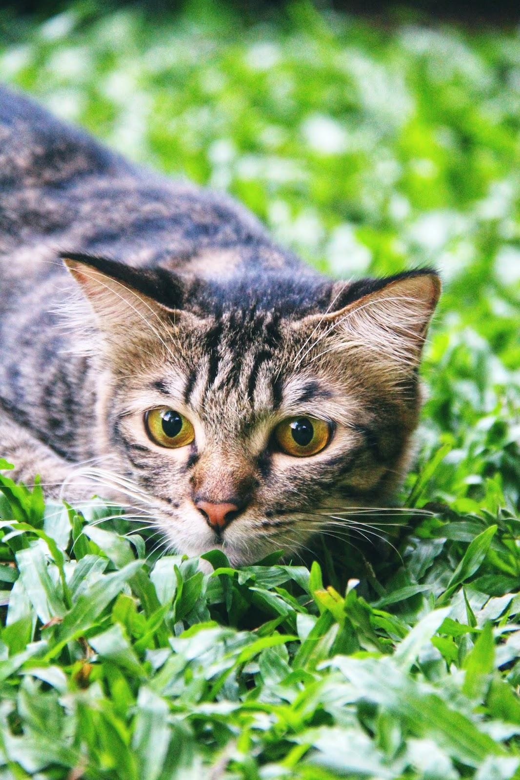 20 Koleksi Gambar Kucing Comel Bernama Tambi 16