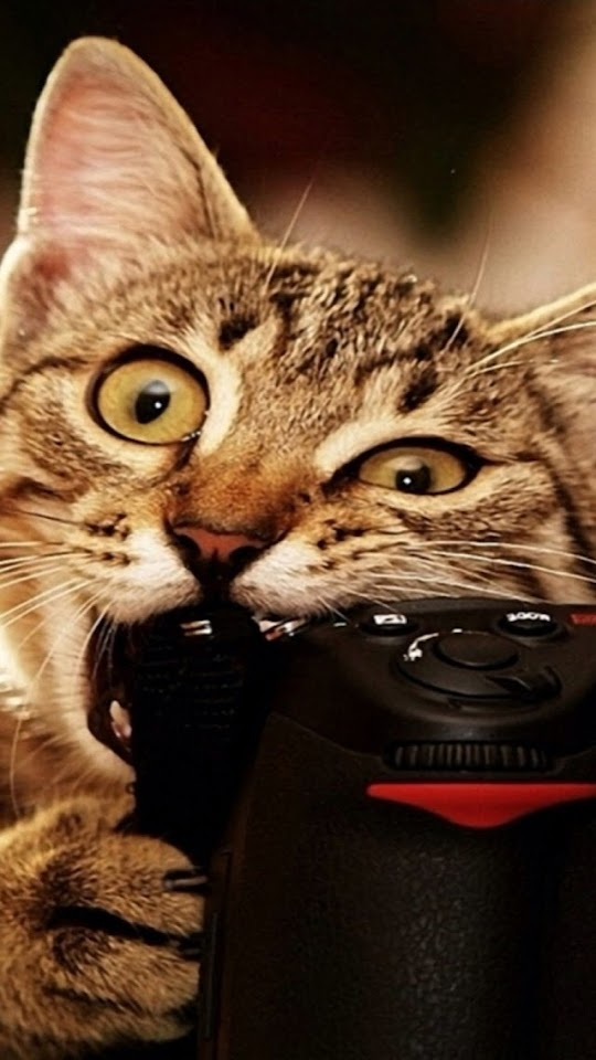 Funny Cat   Galaxy Note HD Wallpaper