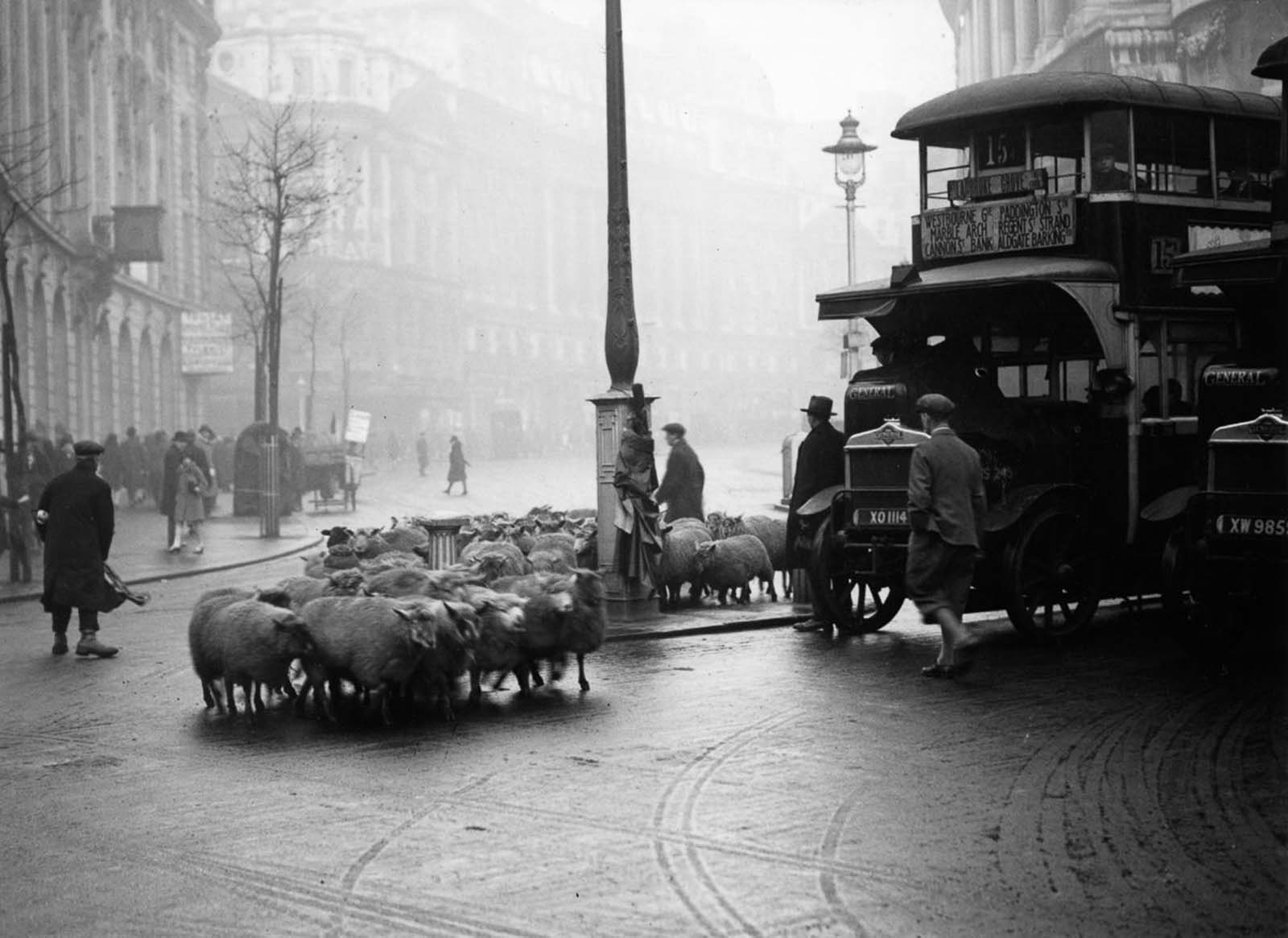 Holding up traffic in the Aldwych. 1928.