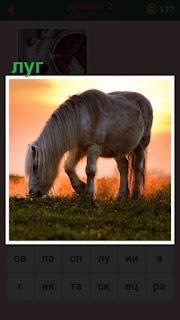 в свете заходящего солнца на лугу пасется лошадь