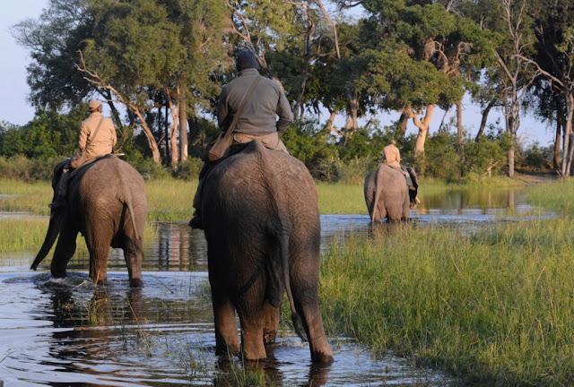 olifanten, elephants, Botswana, Abu Camp, geredde olifanten, Randall Moore, passion for elephants, Afrikaanse olifanten, African elephants