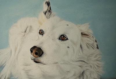 Collie Dog Pet Portrait Oil on Canvas