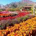 Lokasi, Jam Buka, Tiket Masuk, dan Rute ke Kebun Bunga Begonia, Lembang.