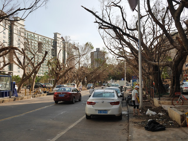 damaged trees on Shuiwan Road after Typhoon Hato in Zhuhai