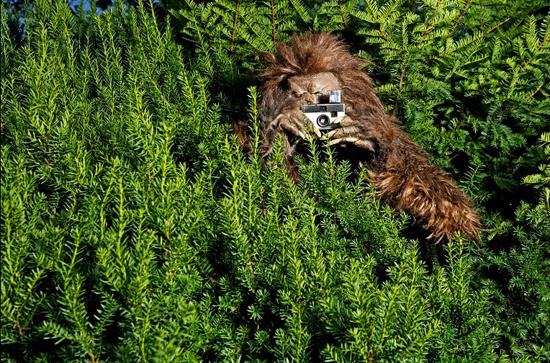 Bigfoot Evidence Bigfoot Photo Of The Day