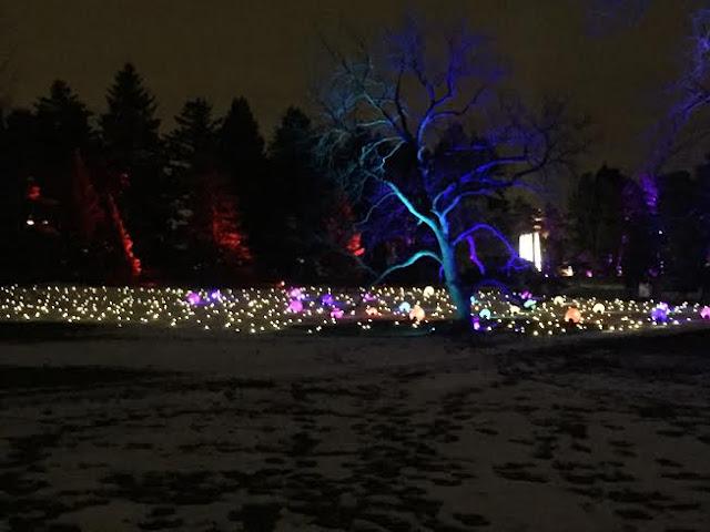 Morton Arboretum Illumination