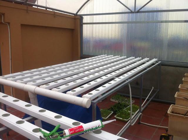 vườn rau sạch sân thượng