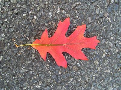 Leaf art creations