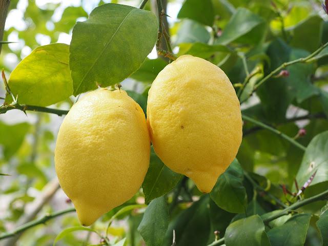usos del limón para tu belleza