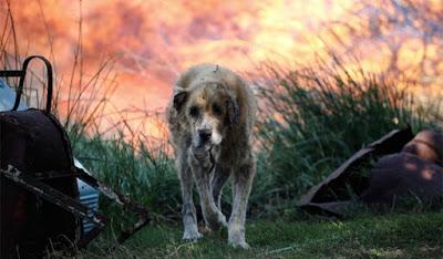 Συγκινει το διαδικτυο...Η συγκλονιστική φωτογραφία ενός σκύλου με εγκαύματα στο Μικροχώρι Αττικής.