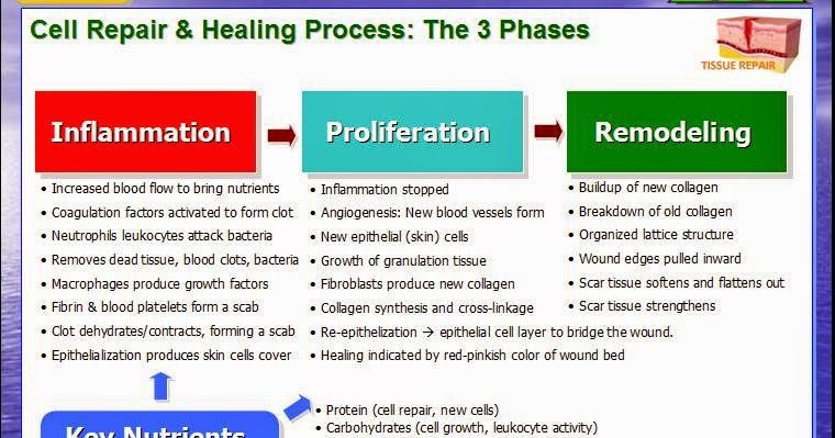 Death to Cancer: The 3 Phases of Wound Healing