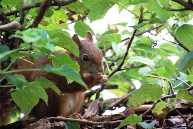süßes Eichhörnchen auf Ü 50 Mode und Lifestyle Blog