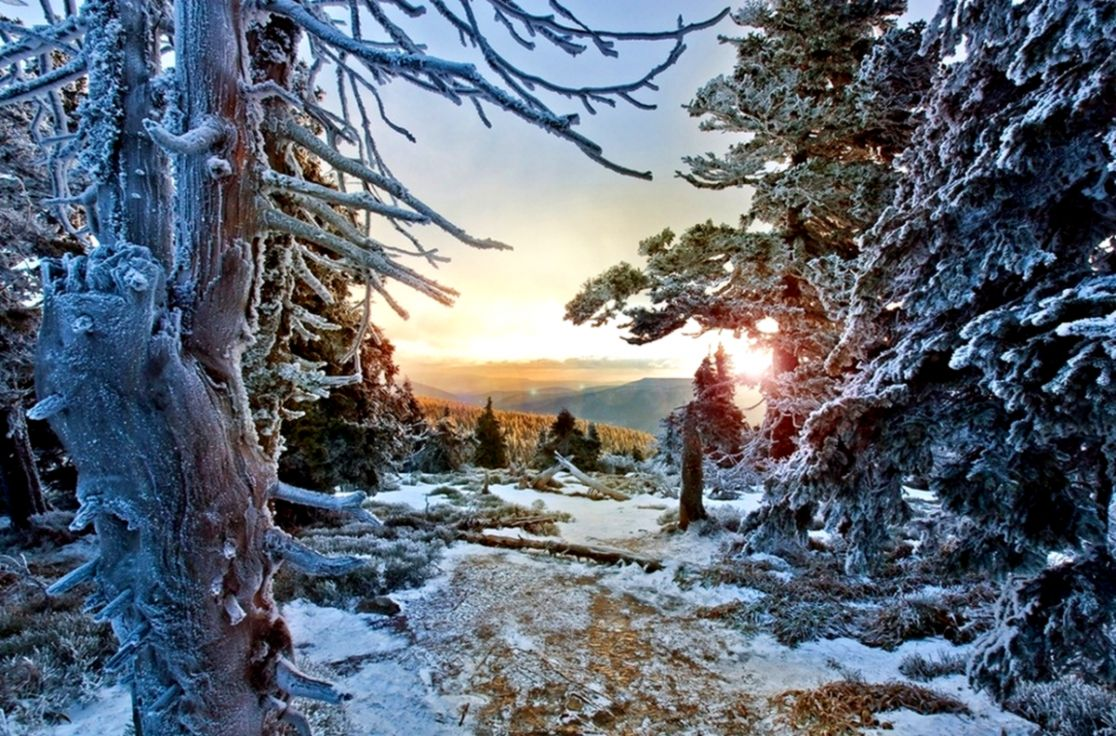 Winter Forest Snow Sunset Trees Frost Cold Czech Republic