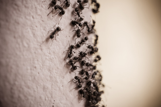 Tips Mengusir Tikus, Semut, Nyamuk, Lalat, dan Rayap, dari Rumah
