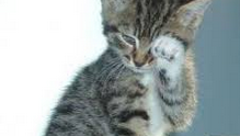 Kucing Saja Bisa Galau Apalagi Manusia Pasti Tahu Lagu Galau