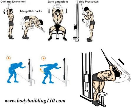 Triceps Exercises & Workouts