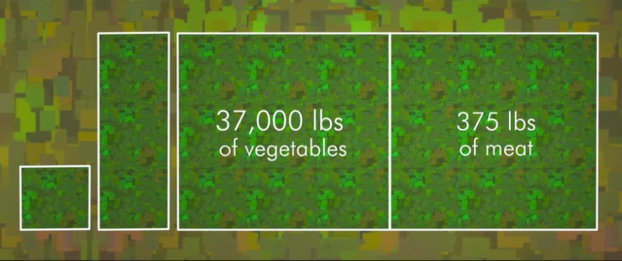 Roční potřeba půdy pro vegana Cowspiracy