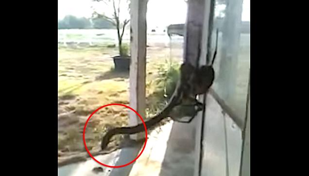 spider eat snakes