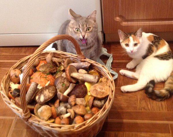 Funny cats - part 220, best cat photo, funny cat pic, cute cats