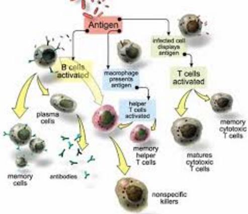 Autoimun; Penyakit dan Kelainan pada Sistem Imun Tubuh