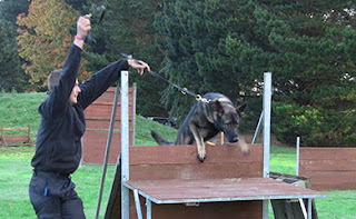 A dog jumping  a wooden platform jump