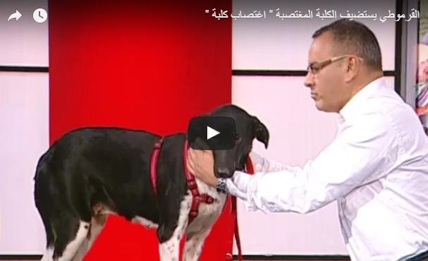 صاحبة «الكلبة المغتصبة» تفجر مفاجأة.. فيديو