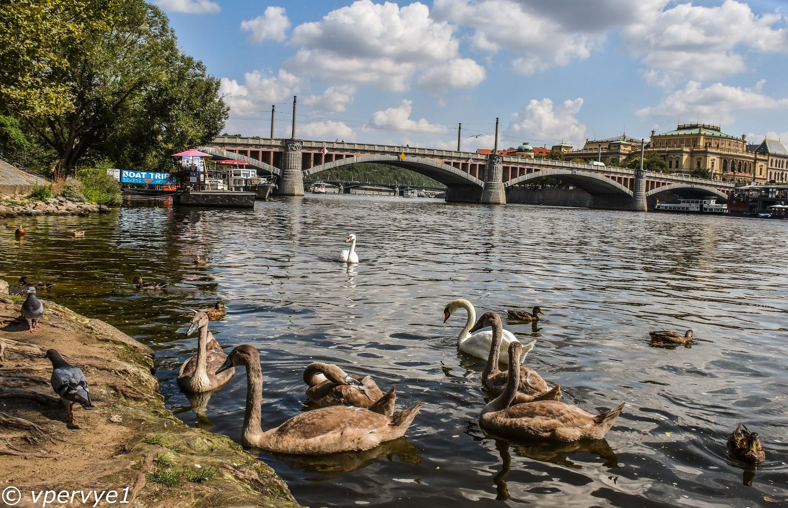 Кто живёт у Карлова моста в Праге