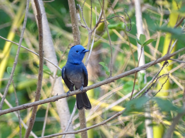 Birds of Pench National Park