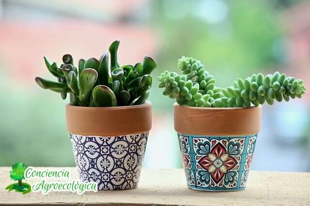 minijardines con plantas suculentas